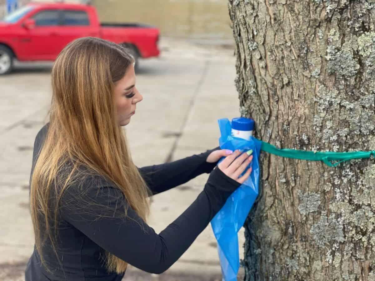 Bri Hoffman '23 taps a maple tree