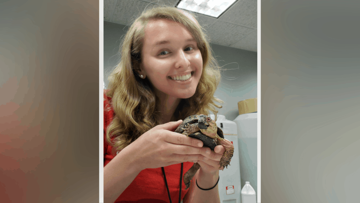 Holly Troesch holds a turtle behind the scenes of her Carnegie Science Center internship.